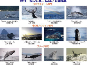 座間味村ホエールウォッチング協会カレンダー