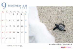 ELNAカレンダー