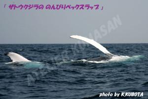 ザトウクジラののんびりペックスラップ