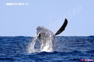 赤ちゃんクジラのブリーチ